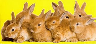 Click image for larger version  Name:BunniesFor.jpg Views:145 Size:42.6 KB ID:10302