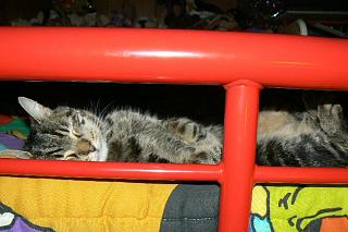 Click image for larger version  Name:happy_cat.jpg Views:114 Size:116.3 KB ID:10427