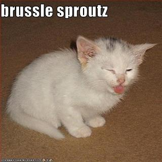 Click image for larger version  Name:brussel sproutz.jpg Views:137 Size:37.4 KB ID:10761