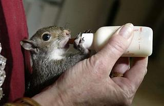 Click image for larger version  Name:squirrel_puppy11.jpg Views:167 Size:25.6 KB ID:11939