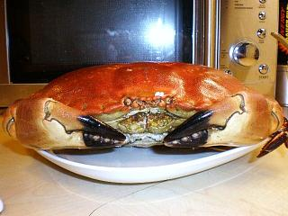 Click image for larger version  Name:ORKNEY CRAB 002.JPG Views:122 Size:100.5 KB ID:14588