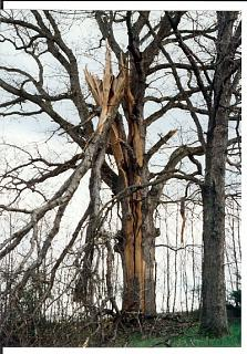 Click image for larger version  Name:tree1 (2).jpg Views:322 Size:172.5 KB ID:1688