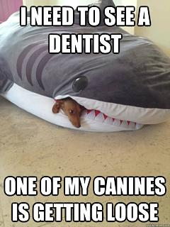 Click image for larger version  Name:Canine Loose.jpg Views:94 Size:41.9 KB ID:17122