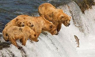 Click image for larger version  Name:Salmon Fishing.jpg Views:101 Size:59.3 KB ID:17205