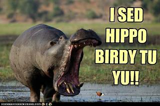 Click image for larger version  Name:hippo birdy.jpg Views:3305 Size:31.2 KB ID:17652