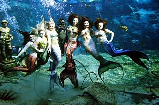 Click image for larger version  Name:mermaids.jpg Views:704 Size:106.6 KB ID:18966