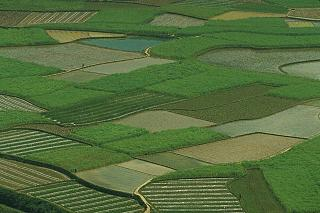 Click image for larger version  Name:rice fields in Hunan.jpeg Views:215 Size:55.4 KB ID:190