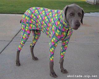 Click image for larger version  Name:dog8.jpg Views:159 Size:33.7 KB ID:2066