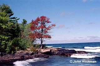 Click image for larger version  Name:Lake%20Superior%20Red%20Maple.jpg Views:195 Size:99.4 KB ID:237