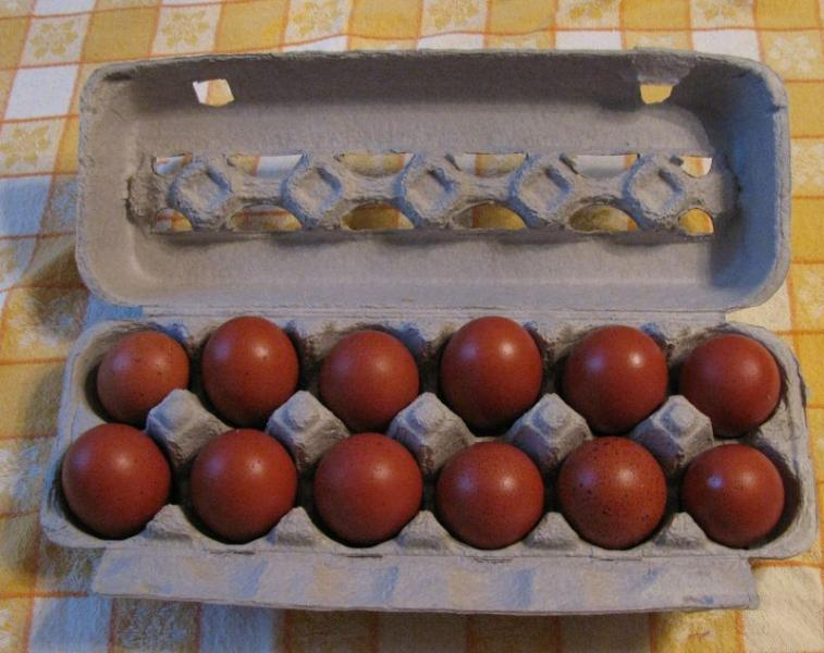 Click image for larger version  Name:Maran Eggs.jpg Views:36 Size:62.1 KB ID:27756