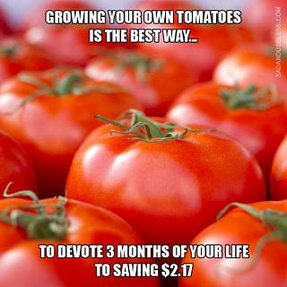 Click image for larger version  Name:Tomato Harvest.jpg Views:46 Size:57.0 KB ID:27835