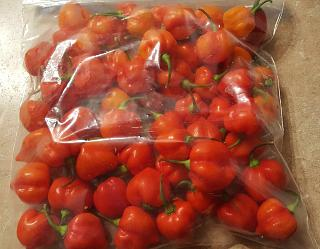 Click image for larger version  Name:habaneros.jpg Views:117 Size:60.3 KB ID:28132