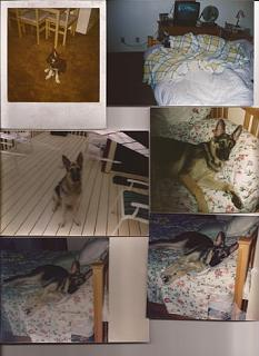 Click image for larger version  Name:vito puppy.jpg Views:103 Size:35.1 KB ID:29076