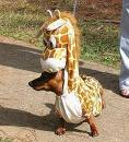 Name:   Giraffe.jpg Views: 54 Size:  5.2 KB