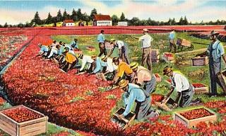 Click image for larger version  Name:cranberry-bogs-harvesting-cape-cod.jpg Views:97 Size:67.2 KB ID:31839