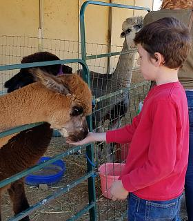 Click image for larger version  Name:Tyler feeding an alpaca.jpg Views:74 Size:55.1 KB ID:32037