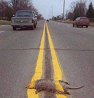 Click image for larger version  Name:roadkill.jpg Views:195 Size:51.6 KB ID:3279
