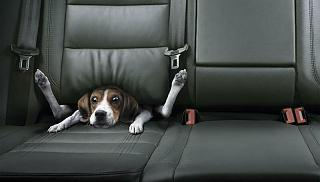 Click image for larger version  Name:puppy.jpg Views:162 Size:34.1 KB ID:332