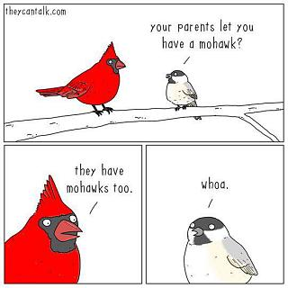 Click image for larger version  Name:birds1.jpg Views:50 Size:31.1 KB ID:33244