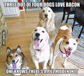 Click image for larger version  Name:three out of four dogs.jpg Views:37 Size:36.8 KB ID:34028