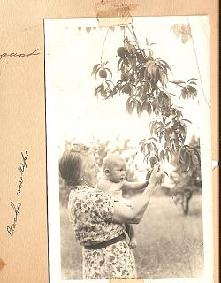 Click image for larger version  Name:Mother Williams, Peaches are ripe.jpg Views:19 Size:42.7 KB ID:35720
