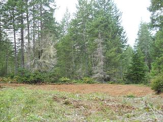 Click image for larger version  Name:the bottom portion of the lot cleared and leveled.JPG Views:21 Size:143.2 KB ID:36895