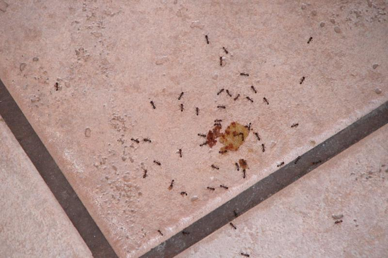 Click image for larger version  Name:ants.jpg Views:78 Size:66.0 KB ID:4858