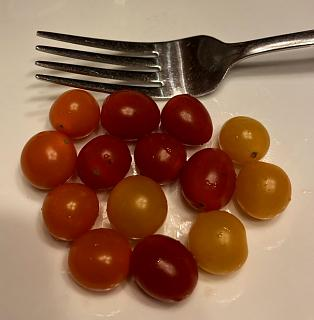 Click image for larger version  Name:sprinkles_tomatoes_090221_IMG_8557.jpg Views:16 Size:30.4 KB ID:48581