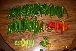 Click image for larger version  Name:Peppers (800 x 533).jpg Views:135 Size:138.0 KB ID:5410