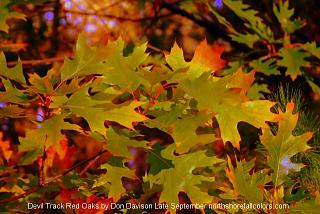 Click image for larger version  Name:fall_colors_2007_5.jpg Views:152 Size:139.3 KB ID:5520