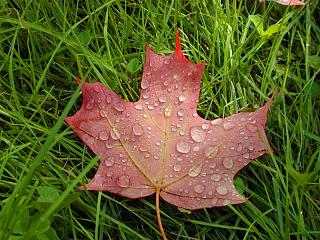 Click image for larger version  Name:LeafwithWater02.jpg Views:131 Size:116.9 KB ID:5779