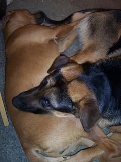 Click image for larger version  Name:Cubbie and Roscoe, relaxing 2-24-08.jpg Views:143 Size:39.9 KB ID:6872