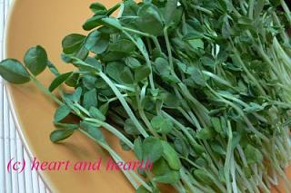 Click image for larger version  Name:Snow_Pea_Sprouts.jpg Views:179 Size:31.4 KB ID:8072