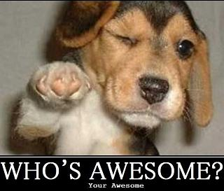 Click image for larger version  Name:AwesomePuppy.jpg Views:135 Size:60.0 KB ID:8603