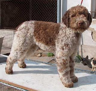 Click image for larger version  Name:guess dog.jpg Views:99 Size:42.4 KB ID:9385